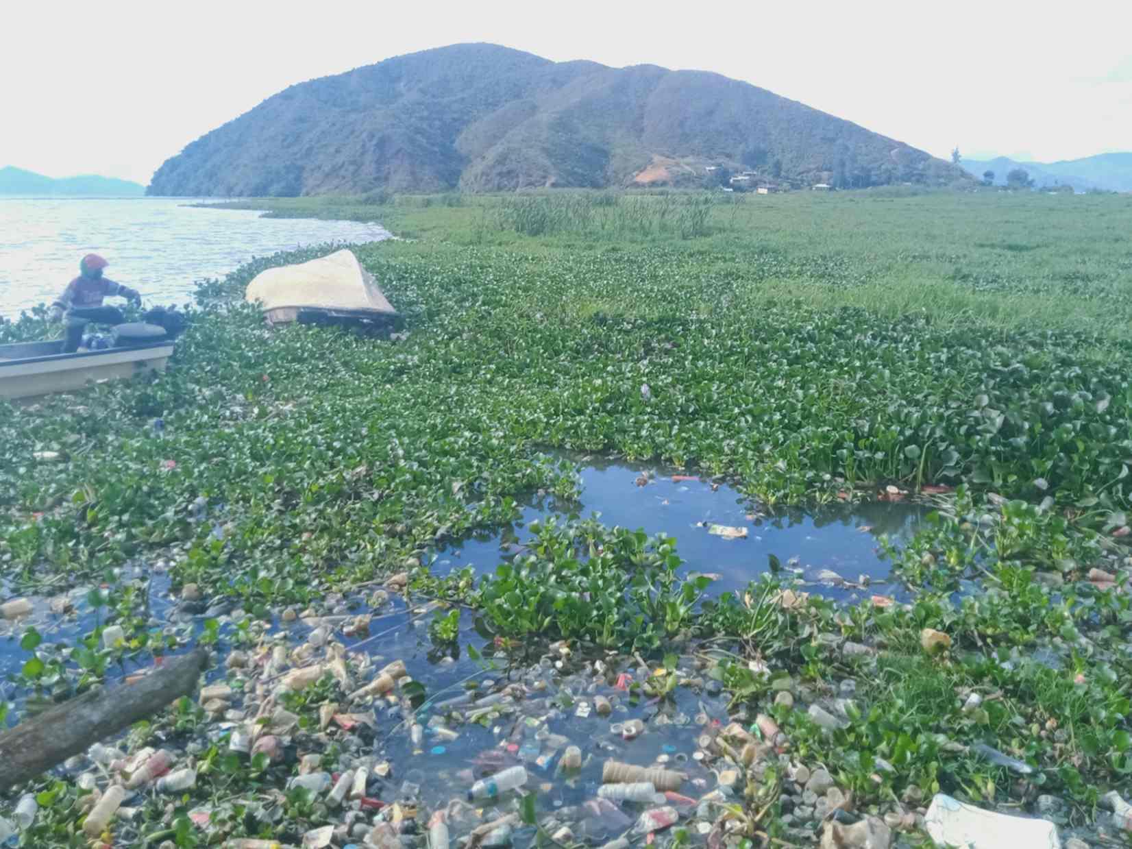 Pemkab Diminta Berantas Eceng Gondok Di Danau Paniai Suara Papua