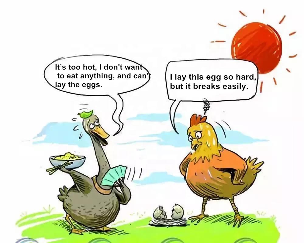 Geflügel gesundheit Humor: Pflanzliche Arzneimittel für Geflügel gegen Hitzschlag gegen Hitzestress,